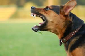Jacksonville Dog Bite Attorney