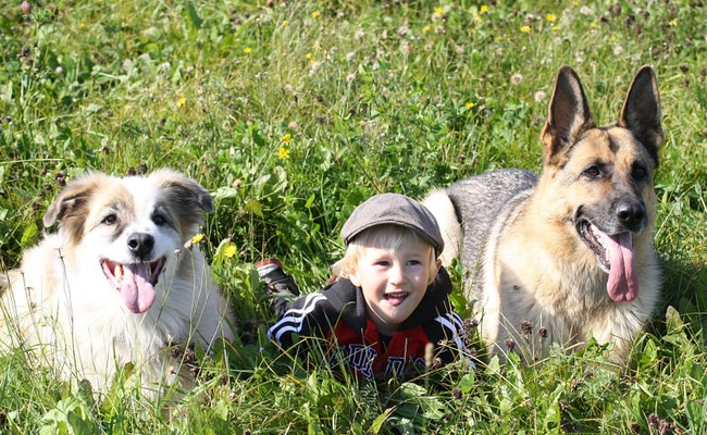 Why Children Get Bitten by Dogs and How to Protect Them