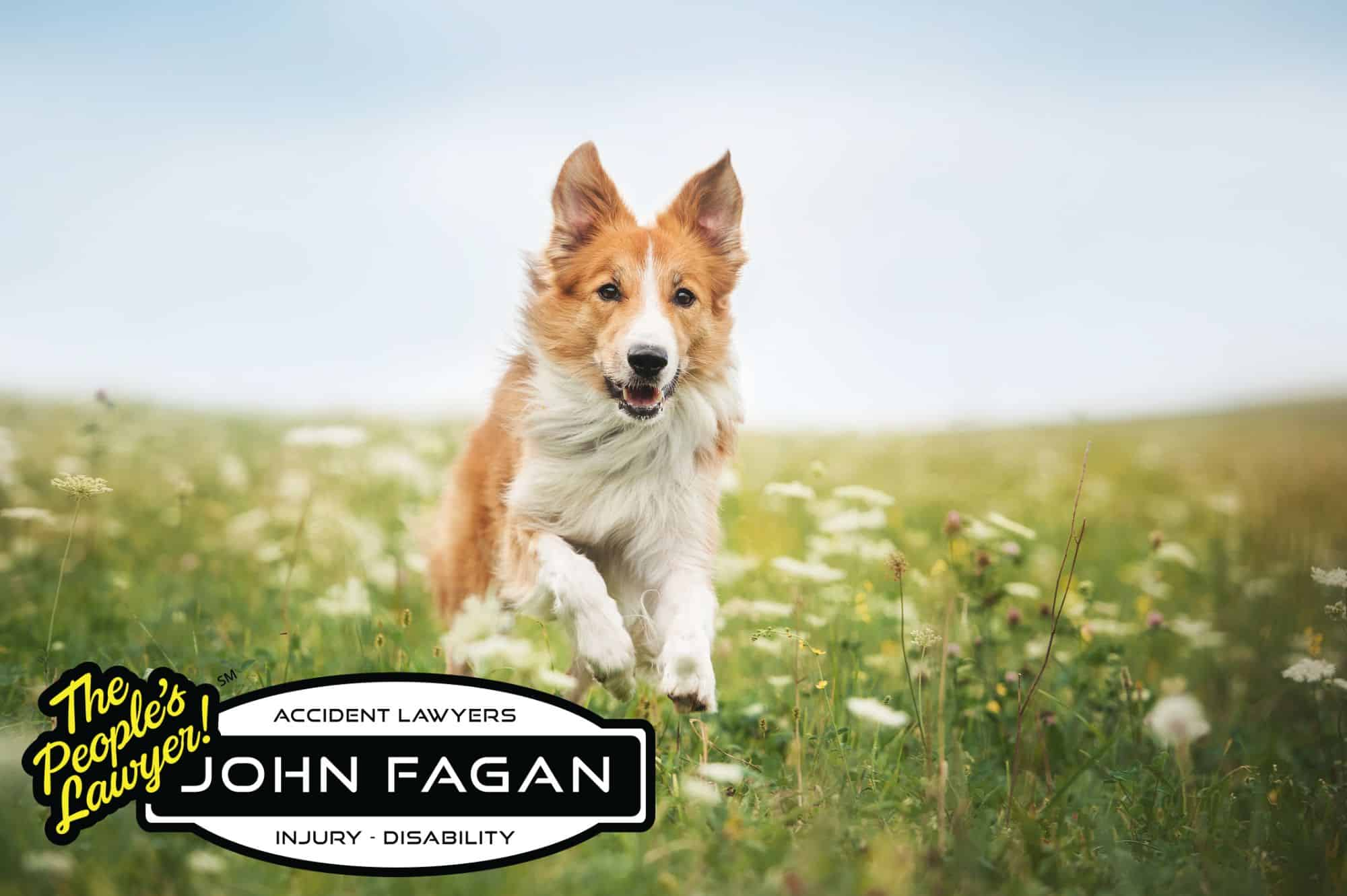 Try these effective mosquito repellents for dogs