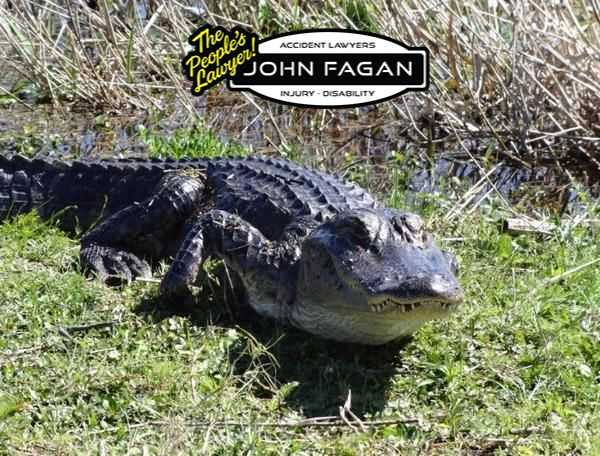 10-year-old girl pried open jaws of gator during attack at Orange County park, records show