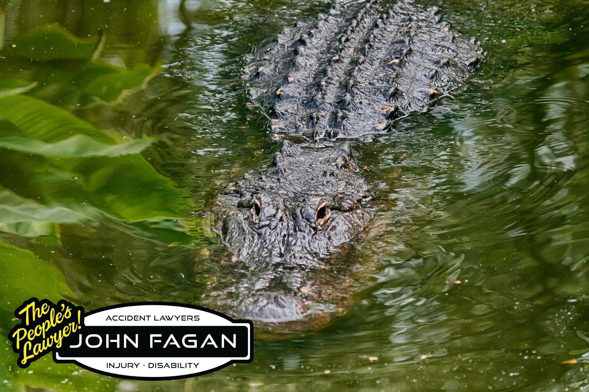 Alligator Safety Advice