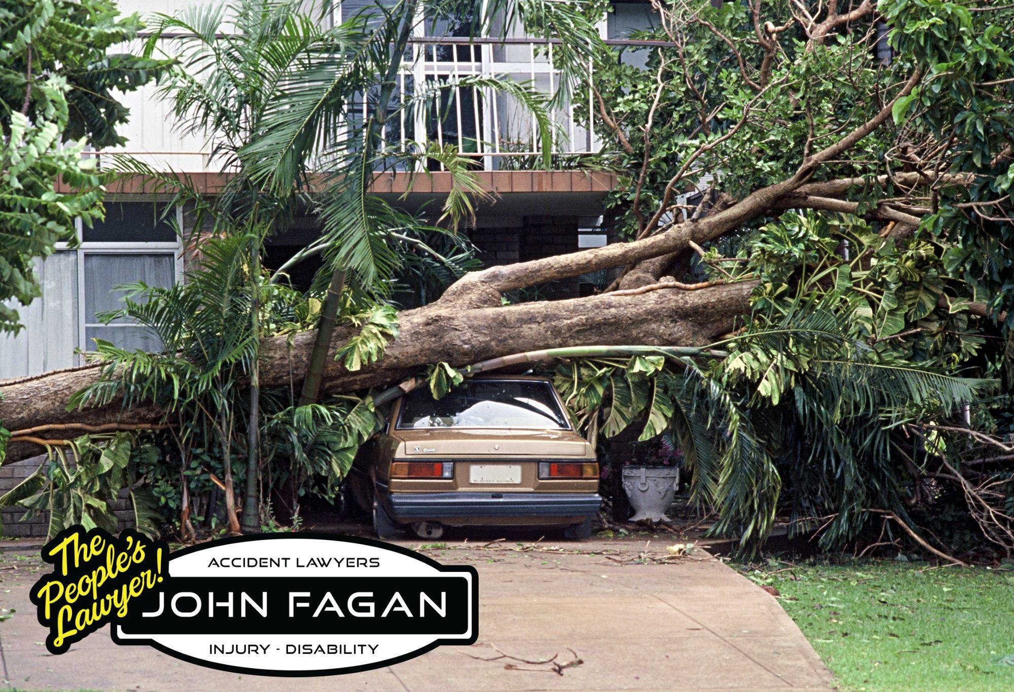 Tree Hazards and Injuries